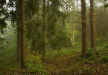 Две берёзки .. / Утро в лесу. Лесной пейзаж .