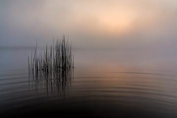 Mystic of the mist / ***