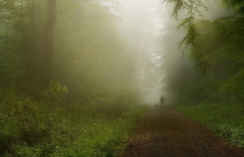 В тумане .. / Утренний лес .