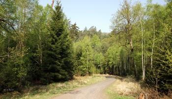 Сонный лес.. / Сонный лес зашумел,задышал  И листва облепила всю крону  Ветерок вновь подул и лист задрожал  Июнь надевает карону...