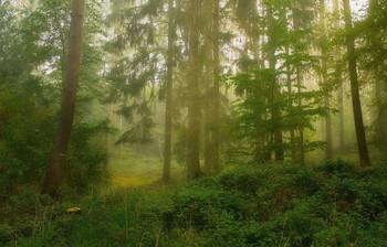 Просвет.. / Туманное утро в лесу .