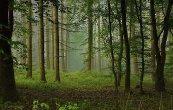 Утренние туманы / Лесной утренний пейзаж .