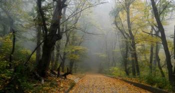 Утром туманным..... / Железноводск. Октябрь