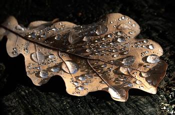 Дождевые композиции... / Украшения осенних листьев...