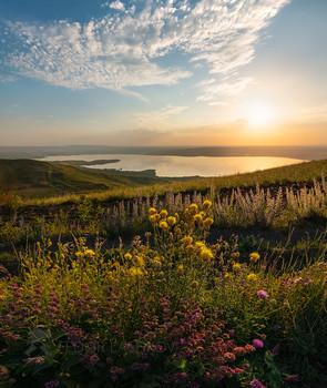 Степное разнотравье / Летняя степь на Ставропольской возвышенности. На горизонте блестит Сенгилеевское озеро. Конец июня, 2020 г. Фотопроект «Открывая Ставрополье».