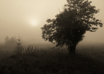 """"""" Солнце, не похожее на солнце - словно лунный диск висит в тумане..."""" / """"Солнце, не похожее на солнце -  словно лунный диск висит в тумане,  словно через пыльное оконце  не пробиться тонкими лучами.  Небо не искрит голубизною,  веки опустило, задремало,  свет укутав серым покрывалом,  вечность дышит праведным покоем...""""  Т.Владимирова"""
