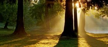 В утреннем парке...... / Петербург. Шуваловский парк. Июнь