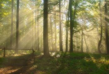 Лучи сквозь туман / Лесной утренний пейзаж.