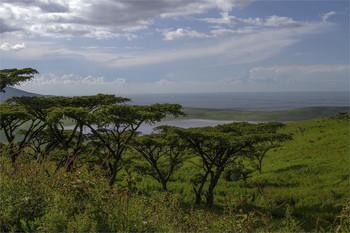Нгоронгоро...) / В кратере Нгоронгоро,Танзания