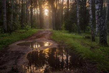 Вечерний лес после дождя / Июльские прогулки