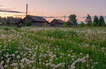 Одуванчиковый закат в Окунево. / Окунево