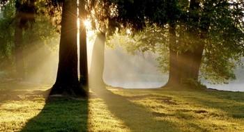 Летним утром........ / Петербург. Шуваловский парк. Июнь