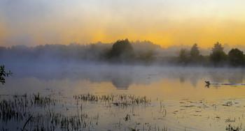Утро на Истоке. / Летний туман на озере Исток. Юго-восток Московской области у посёлка Белоомут. Мещера.