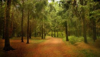 Прогулки в парке / по дорожке