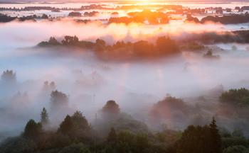 Сквозь туман / Утренние прогулки
