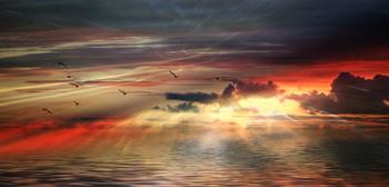 На закате... / птицы улетают