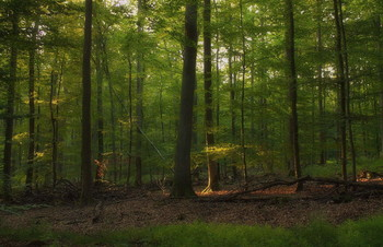 Прозрачный лучик .. / Утренний лесной пейзаж .