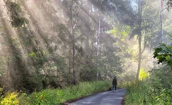 В потоке солнечного света / Утренняя прогулка