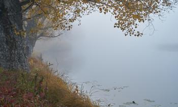 / туман,озеро,дуб