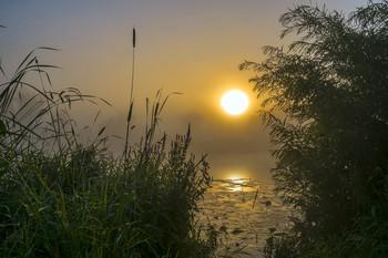 Рассвет. Озеро Студёное. / Летние туманы.