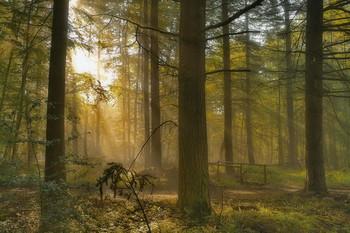 Пробуждение / Утренний лесной пейзаж .