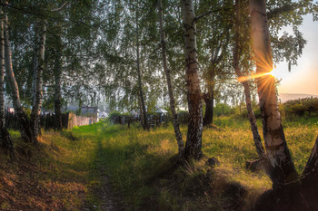 Тропа в поселок / Летний вечер