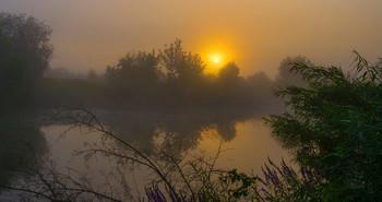 Утренний туман. / Летний туман на озере Студёное. Юго-восток Московской области. Мещера.