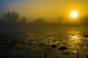 Рассвет. / Озеро Студёное. Мещера.