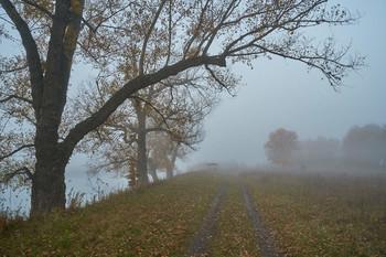 / туман,дервья,дорога