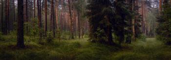 Вечерний лес / Лесные прогулки