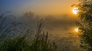 Рассвет. / Туман на озере Студёное. Мещера.