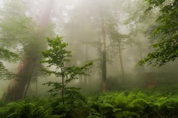 Утро в эльфийском лесу / Реликтовый лес, Горки город, Красная поляна, Сочи  http://www.youtube.com/watch?time_continue=8&v=T19_-ycPYjk&feature=emb_logo