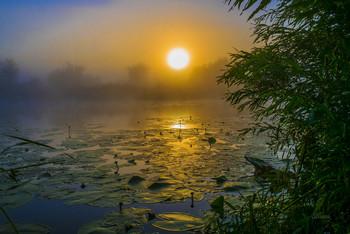 Тишина. / Озеро Студёное на рассвете. Мещера.