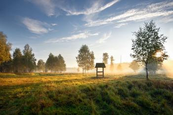 утро в лесу / ***