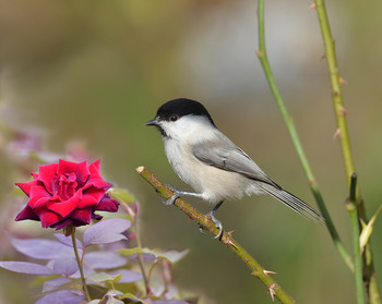 / лето, птицы
