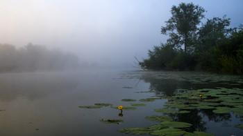 На заре. / Утренний туман на озере Студёное. Мещера, юго-восток Московской области.