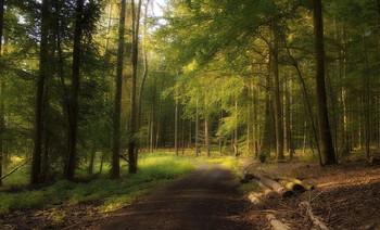 Лесной рассвет / Утренний лесной пейзаж .