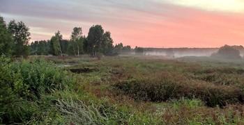 Туманный закат на болотах / Туманный закат на болотах