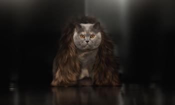 Бонифация) / Было две кошки, теперь одна, но нарядная...)