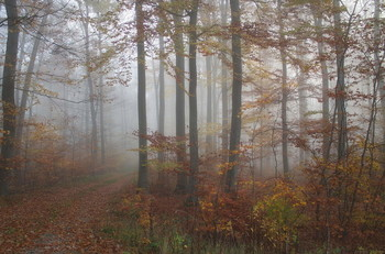 Поздняя осень. / Осеннее утро в лесу . Пейзаж .