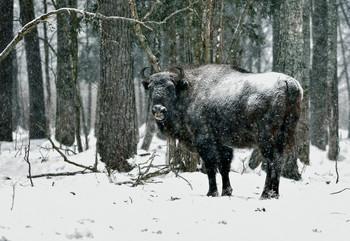 «Калужские засеки» / Национальный природный парк «Угра».Заповедник- «Калужские засеки»