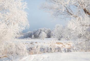 Мороз / зима, снег ,иней