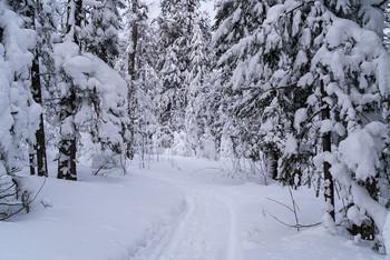 Зима / лес,зима,снег,ели