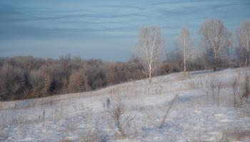 Запутанное небо / зима, березы