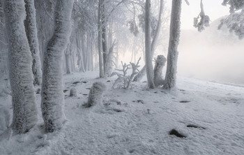 Белоснежная зима. / Мороз и влажность от парящего Енисея украсили деревья..