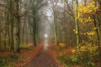 Осень уходит.. / Пейзаж уходящей осени .Этюд.