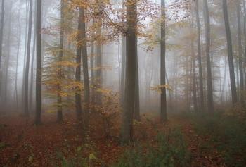 Осенняя палитра . / Утро в осеннем лесу . Зарисовка .