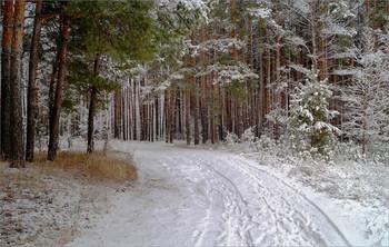 Лес / Лесная дорога