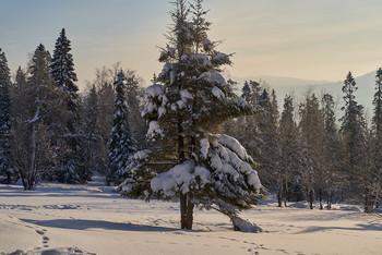 / зима,лес,ели