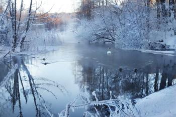 Лебеди остались / На реке парит